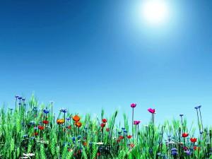Free-Desktop-Backgrounds-for-spring-Flowers